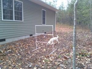 Evie with ladder toss (golf ball toss)