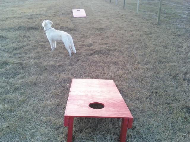 cornhole toss with a puppy (Evie)